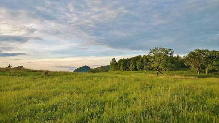 Biomes - Landscape - Flower Field, Meadow, Plain [JA]