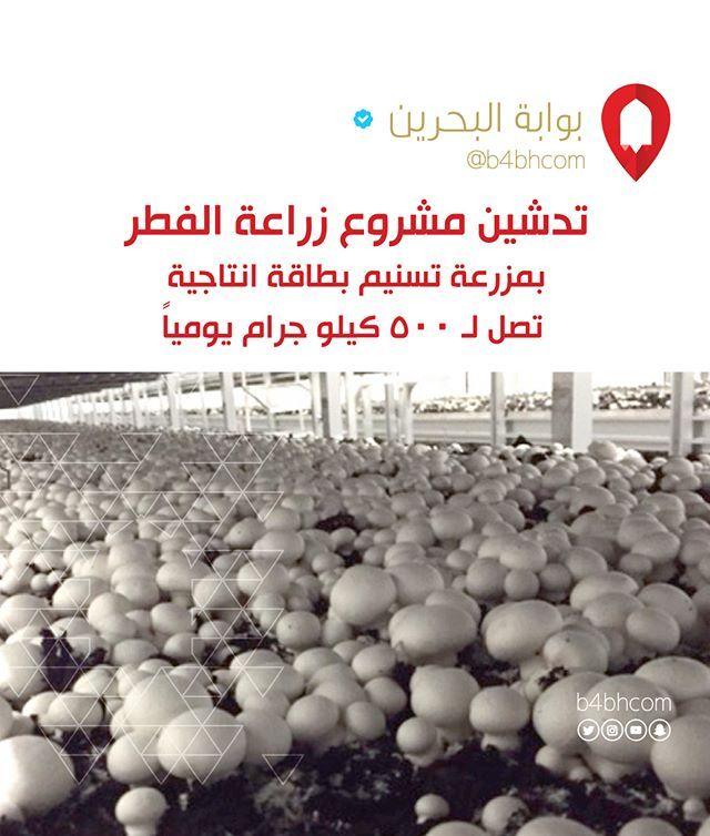 مزرعة تسنيم تطلق أولى مراحل مشروع وانتاج الفطر بطاقة انتاجية تصل لـ كيلوغرام يوميا البحرين الكويت السعودية الإمارات دبي عمان فعاليات ال Instagram