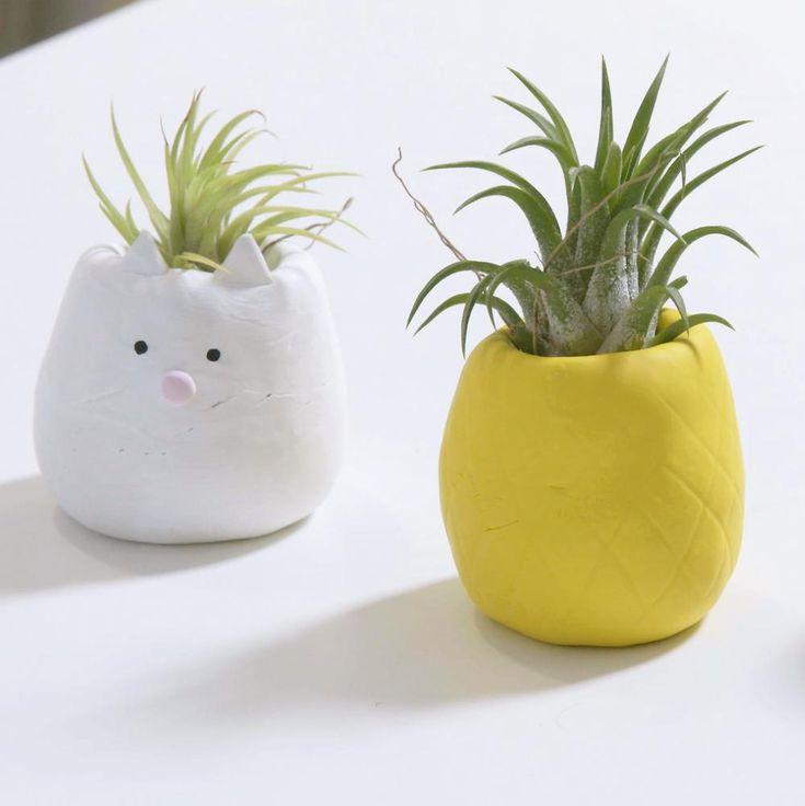 17 meilleures idées à propos de Plantes Aériennes sur Pinterest ...