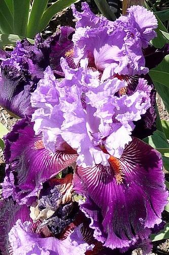 Wild Iris ▓█▓▒░▒▓█▓▒░▒▓█▓▒░▒▓█▓ Gᴀʙʏ﹣Fᴇ́ᴇʀɪᴇ ﹕☞ http://www.alittlemarket.com/boutique/gaby_feerie-132444.html ══════════════════════ ♥ Bɪᴊᴏᴜx ᴀ̀ ᴛʜᴇ̀ᴍᴇs ☞ https://fr.pinterest.com/JeanfbJf/P00-les-bijoux-en-tableau/ ▓█▓▒░▒▓█▓▒░▒▓█▓▒░▒▓█▓