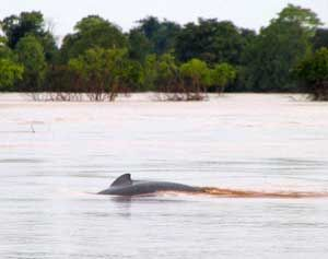 Don Khon, Laos - searching for Irawaddy Dolphins.