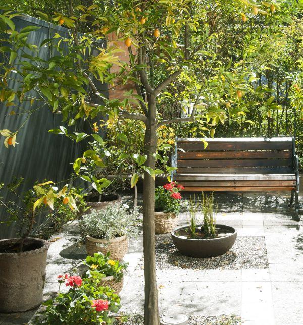 Los árboles frutales le dan un toque especial a tu jardín. ¡Además es fruta orgánica que puedes aprovechar esta temporada! #MiJardinPerfecto.  #Primavera #Deco #Terraza  #Frutales #Hogar #easychile #easytienda #easy #Concurso #Jardin