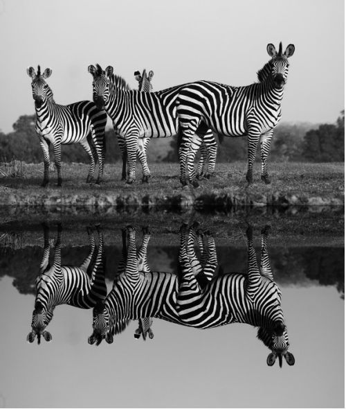 Wild Mammals from $34.99 | www.wallartprints.com.au #AfricanArt #TravelPhotography