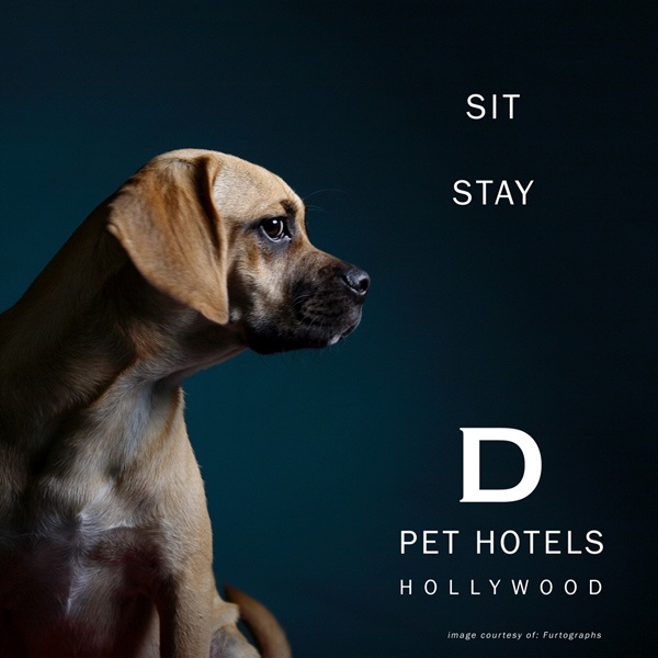 D Pet Hotels, a luxury hotel catering only to dogs