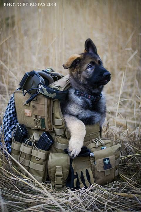 """MWD Hope you're doing well.From your friends at phoenix dog in home dog training""""k9katelynn"""" see more about Scottsdale dog training at k9katelynn.com! Pinterest with over 20,400 followers! Google plus with over 143,000 views! You tube with over 500 videos and 60,000 views!! LinkedIn over 9,200 associates! Proudly Serving the valley for 11 plus years"""