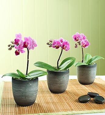 I love my orchids! I have several in the window, brightening my kitchen all winter long!