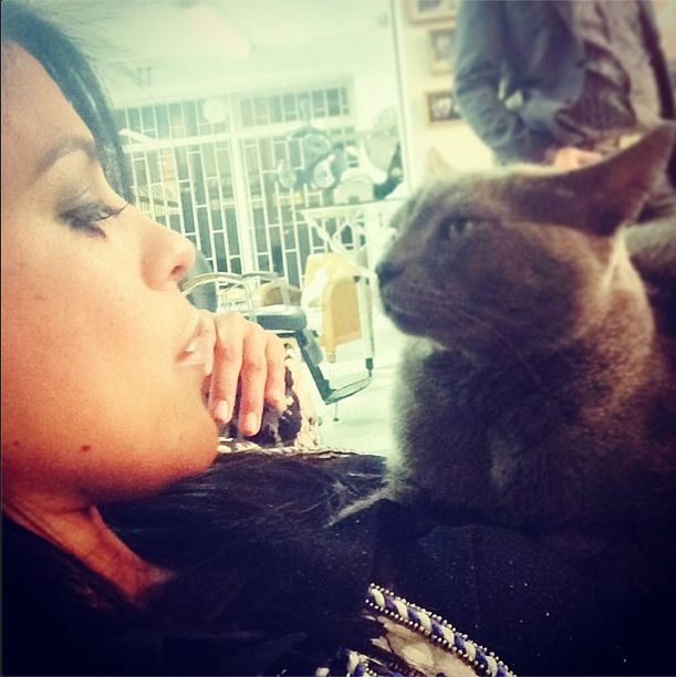 Me pareció ver un lindo Gatito