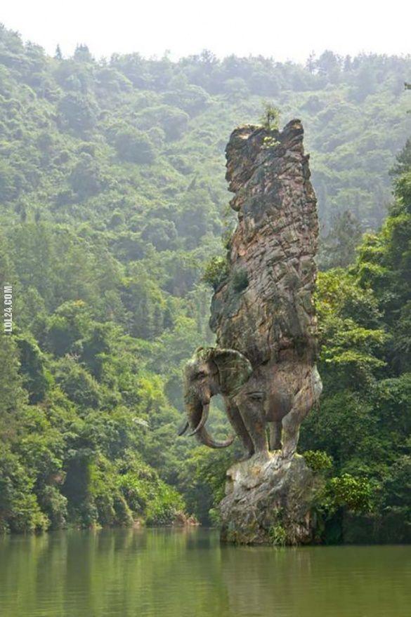 Rock Elephant #rock #elephant