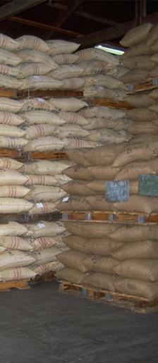 HET OPSLAAN VAN KOFFIEBONEN - Koffiebonen zitten meestal in jute, sisal of hennep zakken van 60 kilo met daarop de kwaliteit, het land van herkomst en de bewerkingsmethode. Koffiebonen worden tegenwoordig ook als bulk in containers vervoerd.