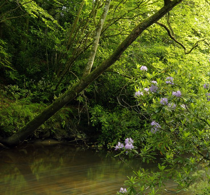 Enjoy a stroll along the 5km River Walk, open only to a select few, including guests of Powerscourt Hotel Resort & Spa.