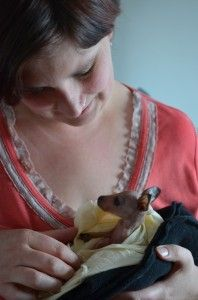 The babies require full time around the clock care http://blog.moretas4less.com/tasmanian-wildlife-carers-doing-an-amazing-job/