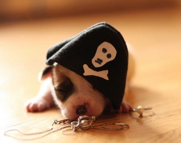 Aargh, I'm tired...: Pet Dogs, Pirates Life, Puppies Pirates, Puppies Piratearrrr, Pirates Hats, Pirates Costumes, Pirates Puppies, Pirates Arrrr, Newborns Puppies