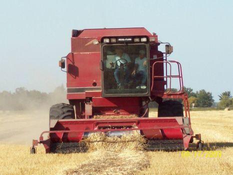 Manitoba Harvest (336 pieces)