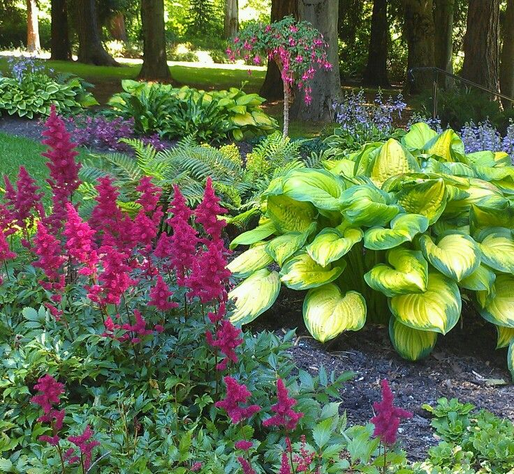 Shade garden love the color combos love the astilbes for Garden trees for shade