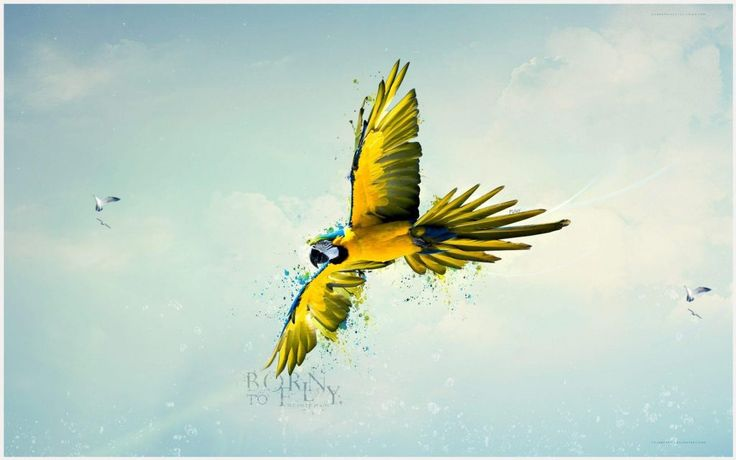 Born To Fly Yellow Parrot Wallpaper | born to fly yellow parrot wallpaper 1080p, born to fly yellow parrot wallpaper desktop, born to fly yellow parrot wallpaper hd, born to fly yellow parrot wallpaper iphone