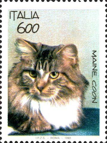1993 - Animali domestici: I gatti - Gatto di razza Maine Coon