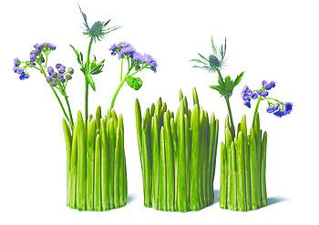 This grass vase is super fun!