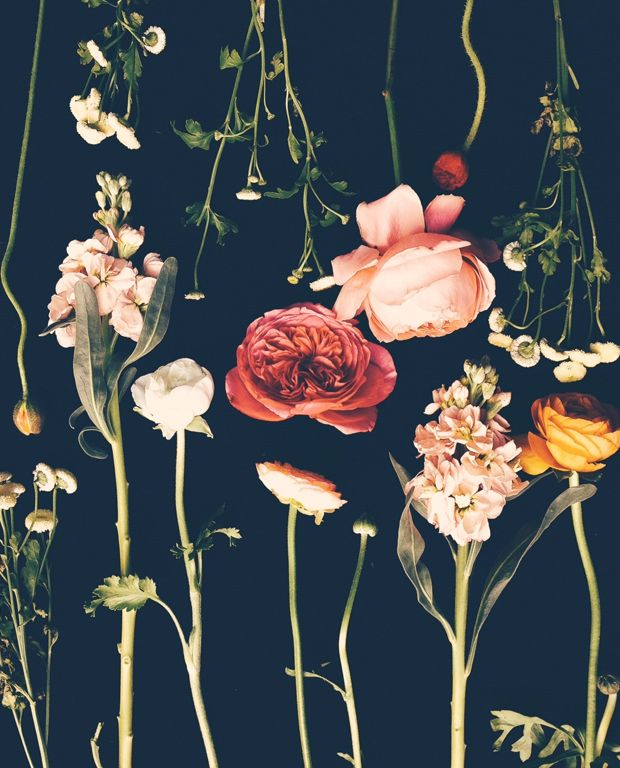 Our friends, the flora. | obsessed with this series. {Flora / Justina Blakeney}