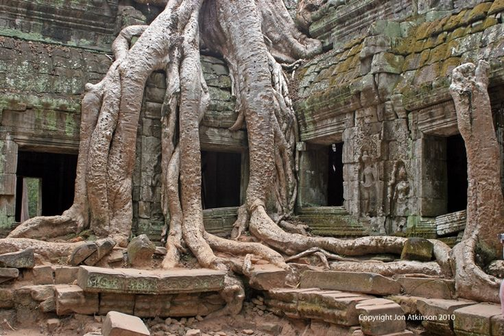 Ta Phrohm Temple: Construction on Ta Prohm began in 1186 AD. It was originally known as Rajavihara (Monastery of the King), Ta Prohm was a Buddhist temple dedicated to the mother of King Jayavarman VII.