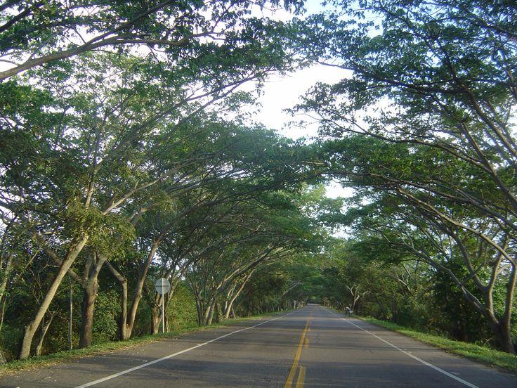 Carretera vía Neiva - parque arqueológico de San Agustín