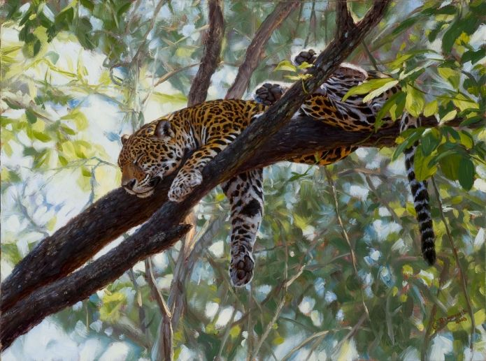 Comfort in the Trees - John Banovich  Limited Edition Giclée Canvas Zawadi Edition: