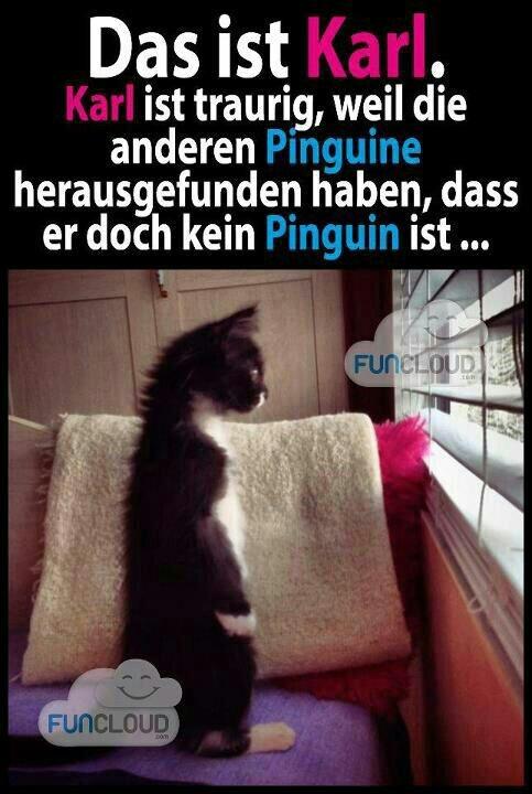 Das ist Karl. Karl ist traurig, weil die anderen Pinguine herausgefunden haben, dass er doch kein Pinguin ist...