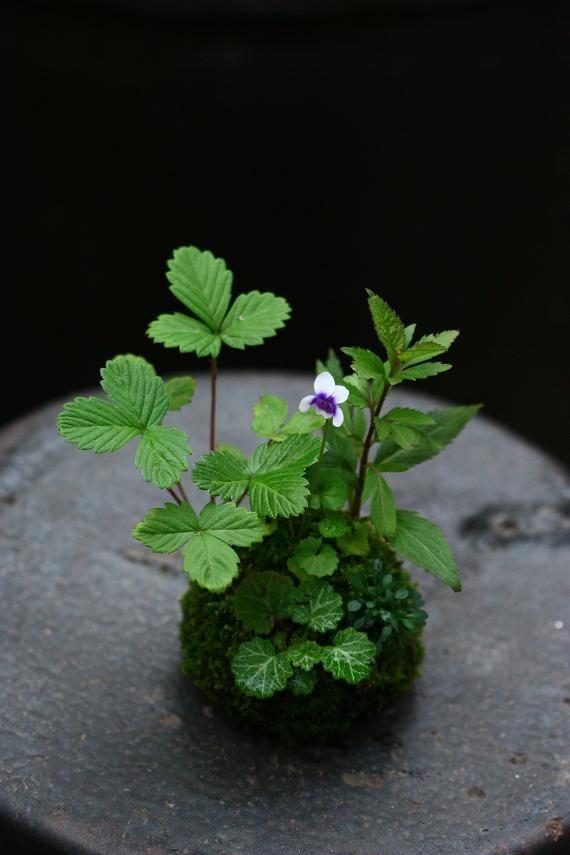 Miniature Moss Gardens: Create Your Own Japanese Container Gardens (Bonsai Kokedama Terrariums & Dis