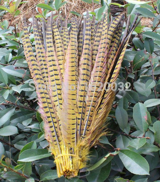 Groothandel, 50 mensen Geel fazant veer 45 tot 50 cm / 18 tot 20 inch, fazanten veren decoraties hot