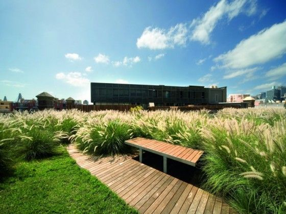 1000 images about grasses on pinterest gardens for Mounding grass