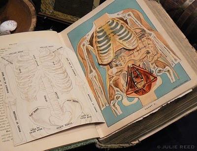 Vintage, 3D anatomy book.  Cool.
