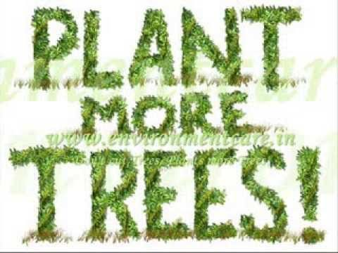 Plant Trees to Save the Environment