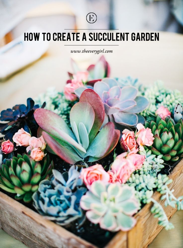 How to Create a Succulent Garden #theeverygirl                                                                                                                                                      More