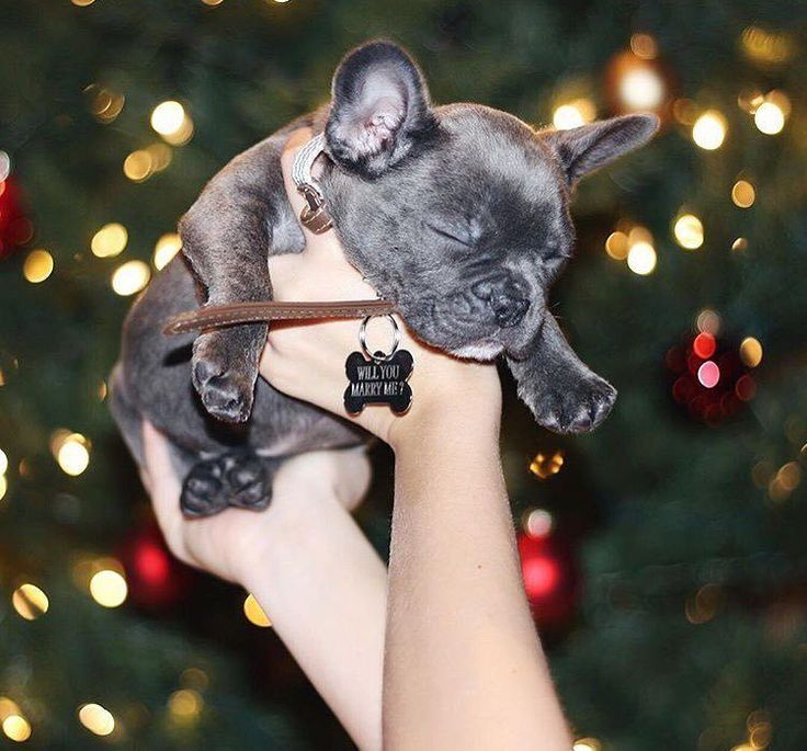 This girl got a puppy and an engagement ring for Christmas! It was the perfect holiday proposal.