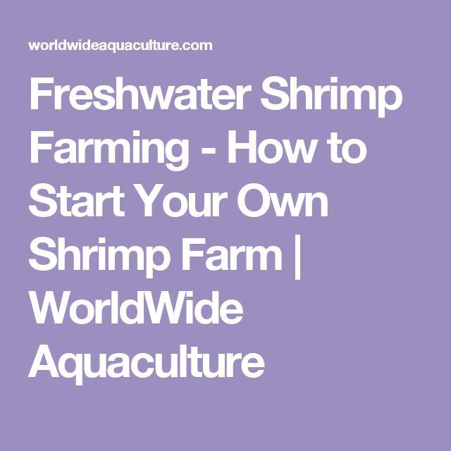 Freshwater Shrimp Farming - How to Start Your Own Shrimp Farm   WorldWide Aquaculture