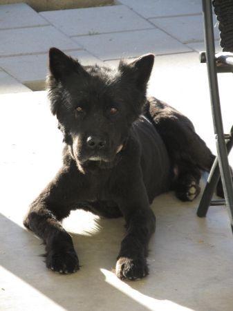 #Missing black #Chow / #Lab mix in north #Phoenix #AZ! #ParadiseValley #UnionHills #101 #scared #dog #injured #help PLZ RT! @PalomaTheBoston