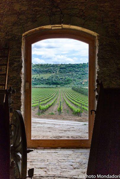 Sette generazioni hanno portato Valle dell'Acate ad essere una delle realtà di maggior spessore nel panorama vitivinicolo della Sicilia sud orientale.