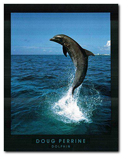 Doug Perrine Dolphin Jumping Ocean Wall Decor Art Print P...…