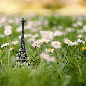 cool....:): Tours Eiffel, Dreams Big, Eiffel Towers, Spring Photography, Daisies, Photography Tips, Dreams Coming True, Popular Pin, The Roller Coasters