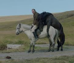Znalezione obrazy dla zapytania zdjęcia koni islandzkie