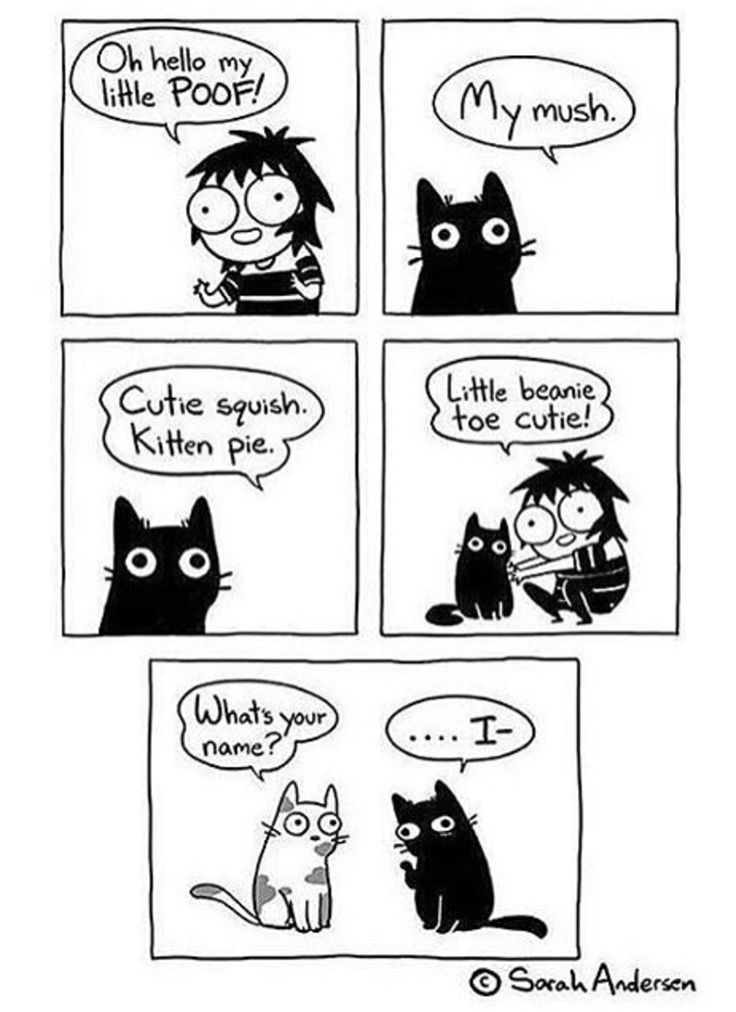 Funny webcomic about not knowing the real name of the cat.