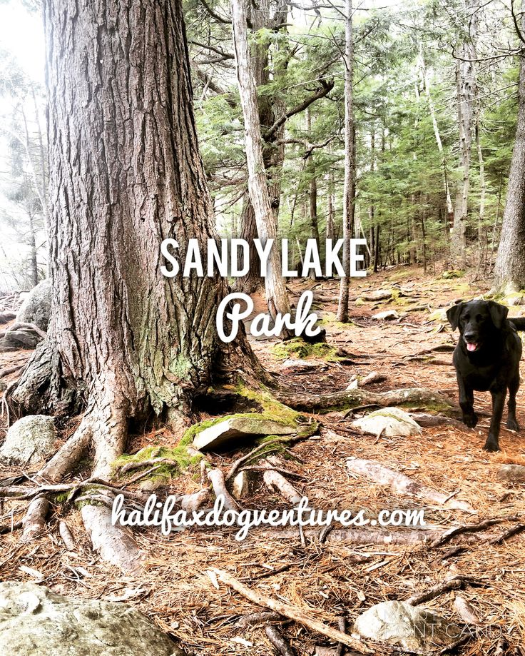 Sandy Lake Park in Bedford, Nova Scotia is very dog-friendly! It has a year-round off-leash area that is perfect for strolling, fetching and swimming. halifaxdogventures.com