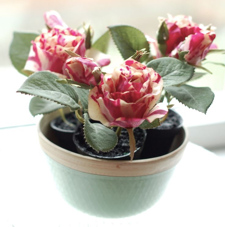 lovely red stripe mini roses in pastel green wooden bowl
