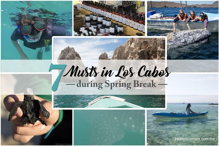 The perfect getaways if you are in Los Cabos, Baja California Sur, Mexico