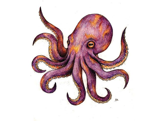 25 best ideas about cute octopus tattoo on pinterest for Cute octopus drawing