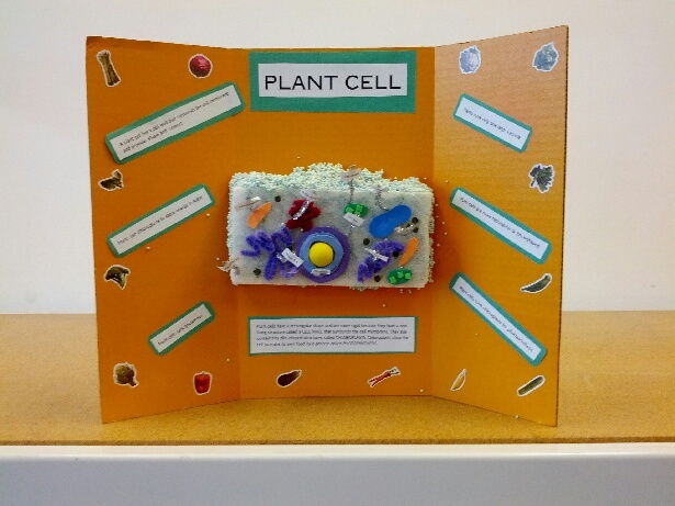 Plant Cell Project Using A Styrofoam Block  Chenille Stems