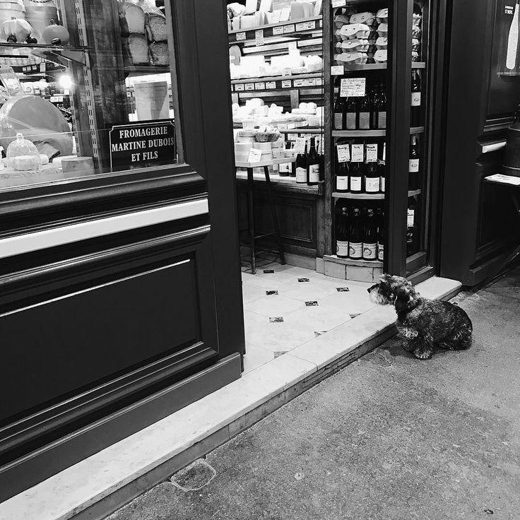 hard life.        #Paris #dog #igersparis #paname #street #streetphotography #streetphoto #photography #bw #noiretblanc #blackandwhite #noir #bw_streetphotography #iphone7 #streetphoto #parisjetaime #bnw #alwaysparis #weloveparis #bw_crew  #bnw_captures #bnw_society #streetphotography_bw #monotone #monochrome #instadaily #instablackandwhite #insta_street #insta_bw #bw_photooftheday #chien
