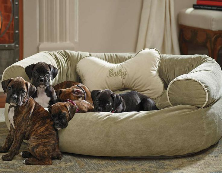 This pet couch offers unsurpassed support that ordinary dog beds can't match.: Dogs Beds, Comfy Couches, Pet Products, Cute Boxers Puppies, Pets, Pet Beds, Dog Beds, Couch Pet, Pet Supplies