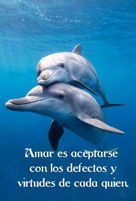 Frases Y Pensamientos Frases De Amor Con Delfines Frases