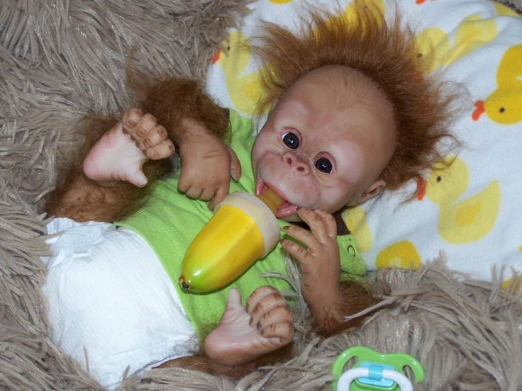 "Fake - This is a Doll. It is not real! - This is listed on Ebay as:  ""Introducing Little Baby BOY Monkey  ~CHUIE~ Date Of Birth 5/23/2012 Weight 3lb 11oz Length 17 inches Time 12:35 P.M -  By Reborn Artist: Melody Green"""