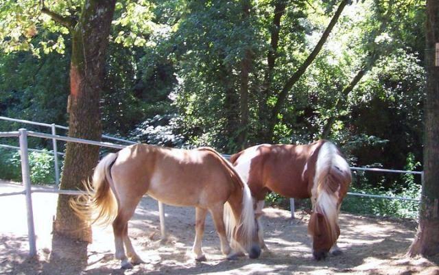 PAINT HORSE http://www.equirodi.it/annunci/cavalli-in-vendita/paint-horse.htm  Paint nato 2005 . ottimo in passeggiata e in campo anche per principianti.  Barefoot: ottimo piede.  (2500)